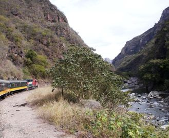 Discover Copper Canyon by train