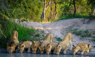 Classic Kruger Safari & Mozambique by road