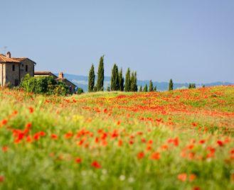 Luxury Italy Honeymoon