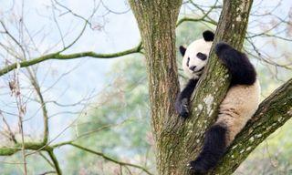 Luxury Family China: Emperors, Warriors and Pandas