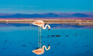 Luxury Southern Altiplano: Chile, Bolivia, and Argentina