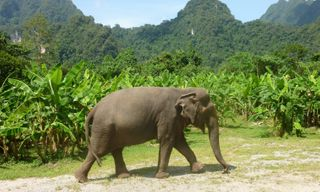 Thailand for families: Elephants & island escape