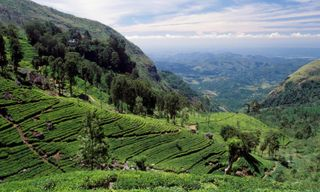 Colonial Sri Lanka: Kandy, tea country & Galle