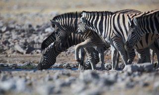 Namibia's wildlife highlights self-drive safari