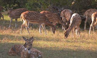 Sri Lanka's wildlife highlights