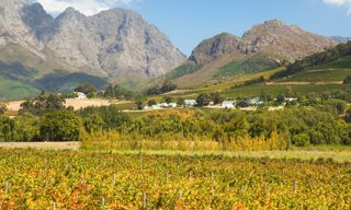 The Grape Escape: Cape Town & Winelands self-drive