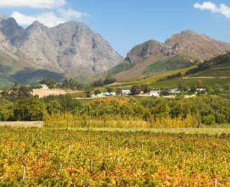 The Grape Escape: Cape Town & Winelands self-drive