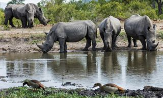 Cape Town to Kruger: Luxury South African Rail Journey