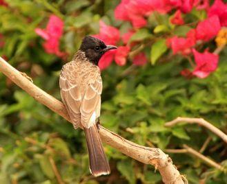 Birdwatching in India