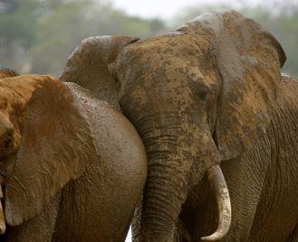 Ultimate Kenya Safari: Amboseli, Meru and Masai Mara