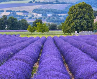 Perfumes of Provence Self-Guided Cycling Tour