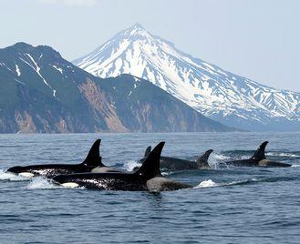 Self Drive Whales, Bears & Vancouver Island