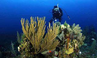 Belize Discovered