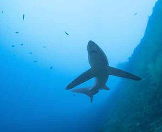 Sharks & Reefs