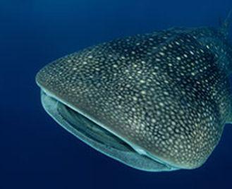 Big In The Maldives