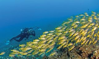 Christmas & Cocos (Keeling) Islands Diving Experience