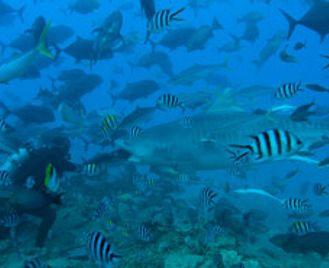 Dive Beqa Lagoon & Somosomo Strait
