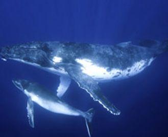 Fiji & Tonga Dive Experience