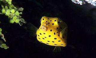 Dive & Discover Madagascar