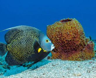 North & South - Discover Tobago