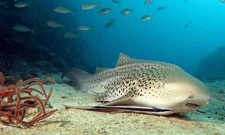 Phuket & Khao Lak Diving