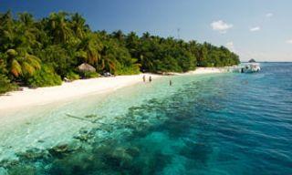 Ari Atoll Diving Experience