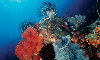 Wakatobi Dive Resort & Pelagian Liveaboard