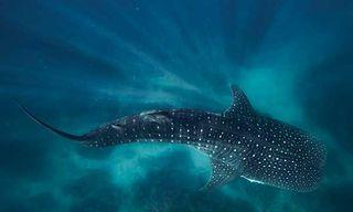 Western Australia Diving