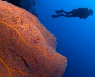 Maldives Dive Safari