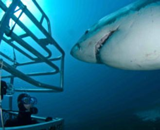 Liveaboard Diving - Great White Shark Expedition