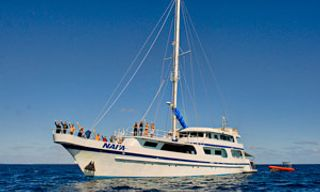 Tonga Nai'A – Whales, Volcanoes & Virgin Coral Reefs