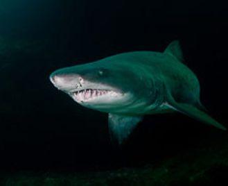 South Africa & Mozambique Dive Safari