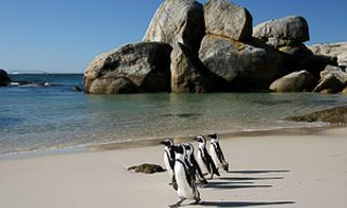 Cape Town Extravaganza