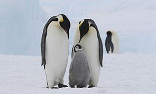 Classic Antarctica