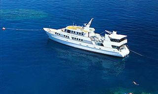 Great Barrier Reef & Coral Sea Safari