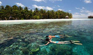 Ari Atoll Snorkelling Experience