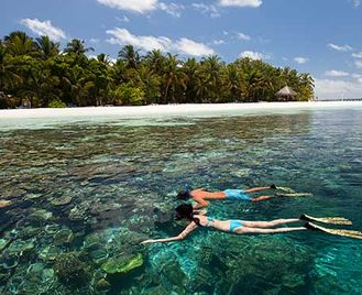 Ari Atoll Snorkelling Experience