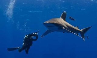 Oceanic White-Tip Adventure