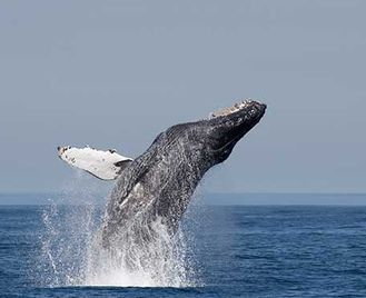 Great Whales Of Mexico'S Pacific Coast (Wildlife Worldwide)