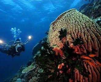 Dive Into Atlantis