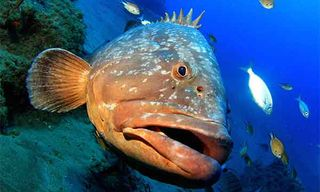 Lanzarote Dive Experience