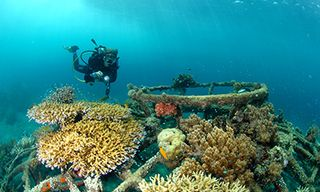 Dive & Culture In Bali
