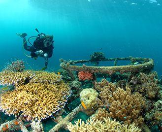 Dive & Culture In Bali