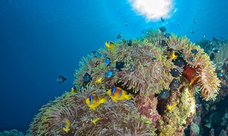 Soma Bay Dive Adventure