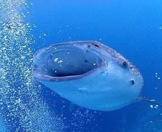Dive & Detox Maldives