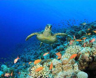 Sharm Dive Extravaganza