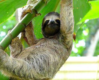 Costa Rica: Wildlife And Beach Itinerary