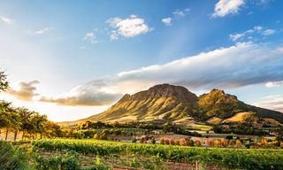 South Africa: Safari, Winelands And City Escape