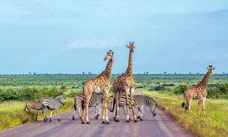 South Africa: Cape Peninsula, Swaziland And Kruger National Park