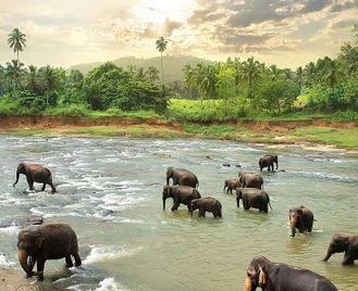 Sri Lanka: Grand Tour Of Sri Lanka